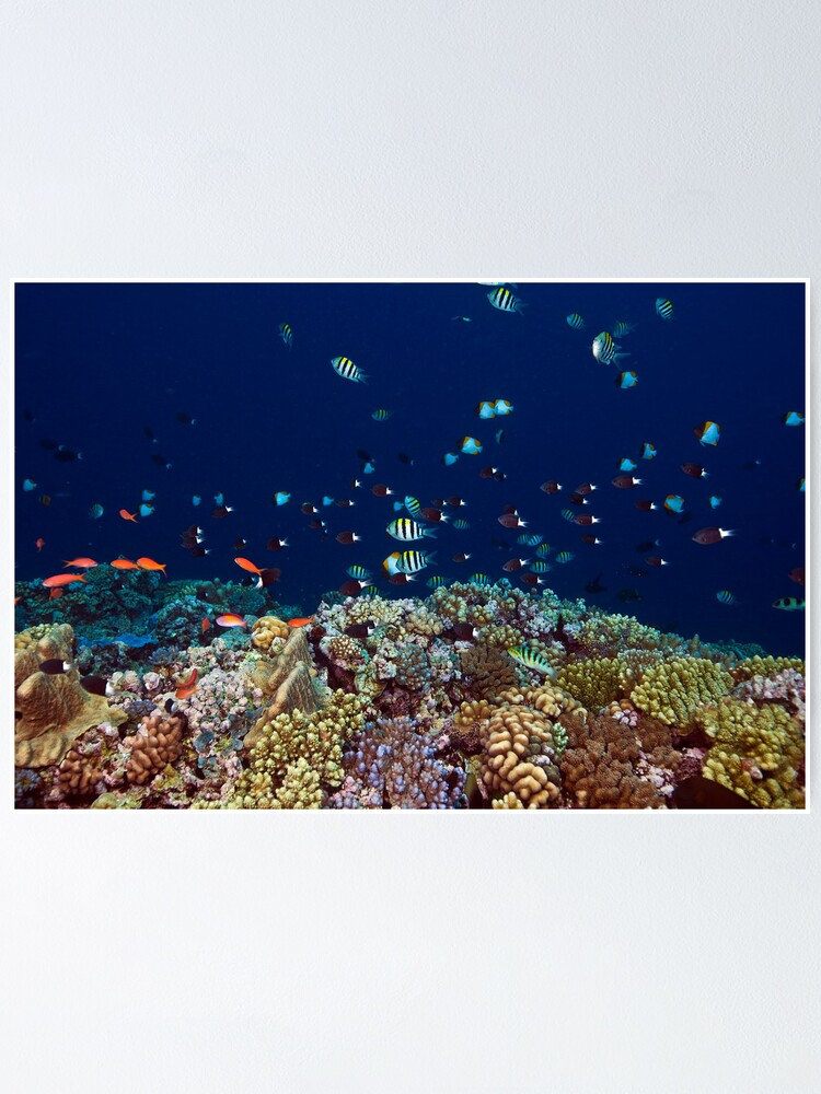 Alternate view of Reef edge Poster