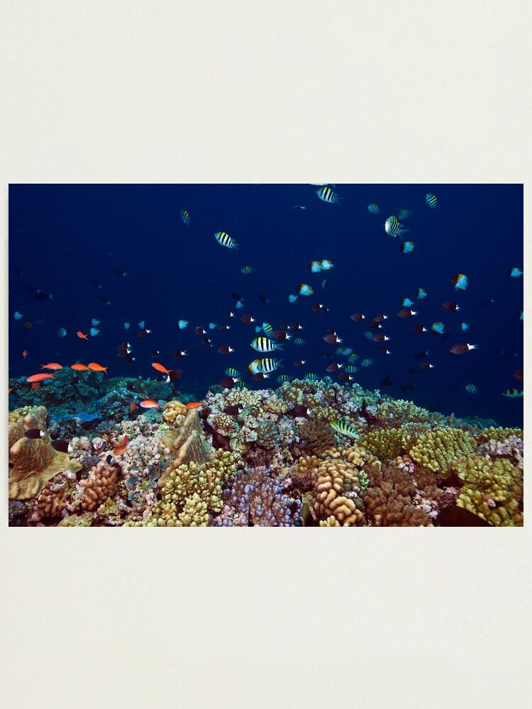Alternate view of Reef edge Photographic Print