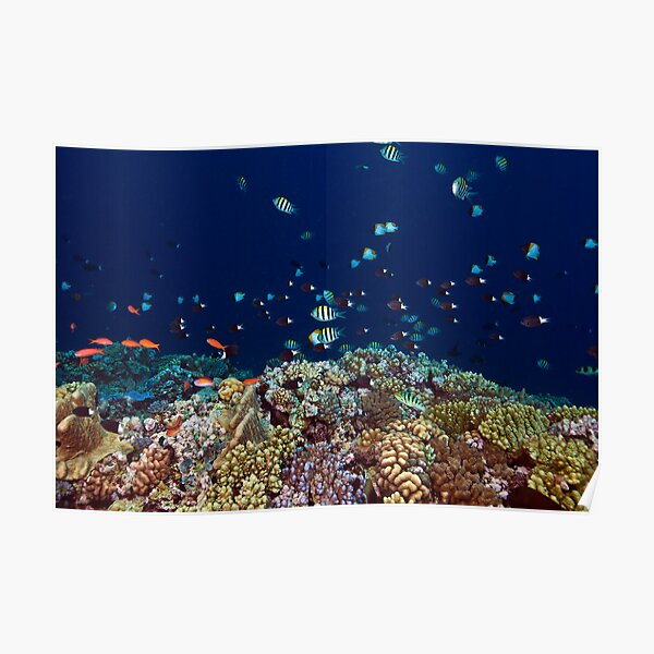 Reef edge Poster