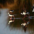Evening Waders 2 by byronbackyard