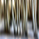 Winter Birch by Varinia   - Globalphotos