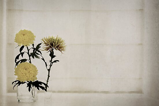 Chrysanthemums by Jenifer Wallis