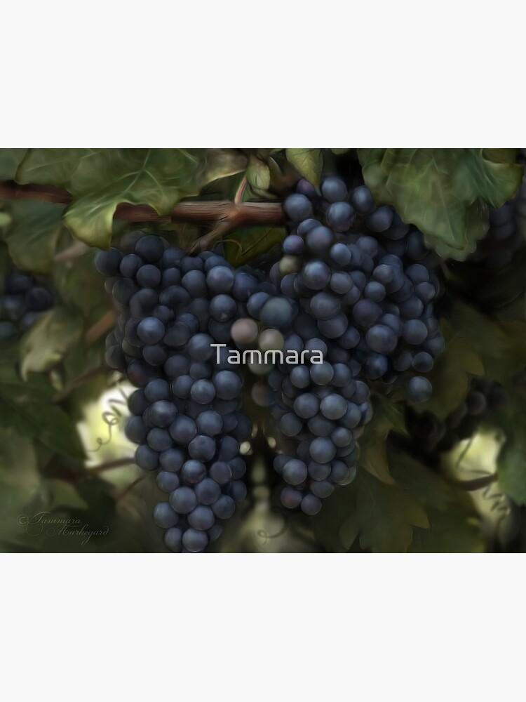 The Harvest by Tammara