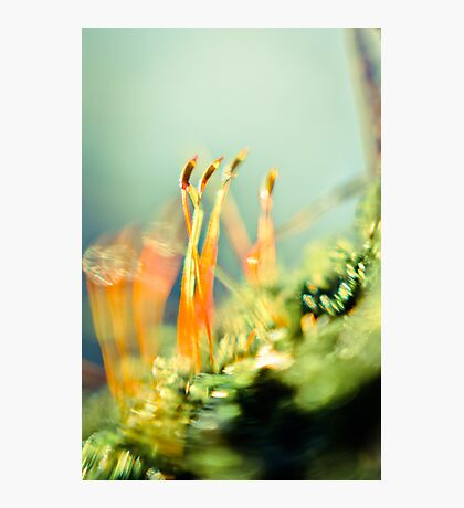 Life in Miniature  Photographic Print