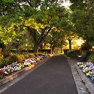 Princes Park, Hobart, Tasmania #3 by Chris Cobern