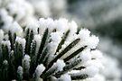 Winter's Embrace by Rhonda Blais