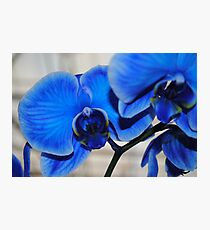 Bright Blue Orchids Photographic Print
