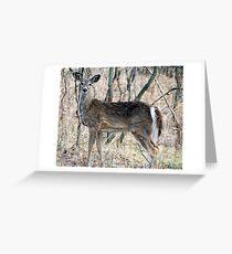 Doe, A Deer, A Female Deer... Greeting Card