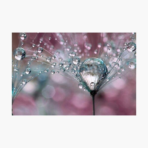 Raspberry Sparkles Photographic Print