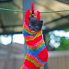 Cat In Sock...the sequel. by Lanii  Douglas