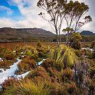 Hartz Mountains Plateau #3 by Chris Cobern
