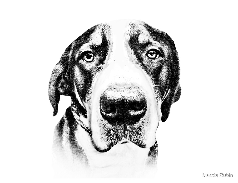 Swiss Mountain Dog by Marcia Rubin