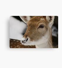 Snow on the Nose Canvas Print
