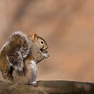 Are You Nuts?! by Janika