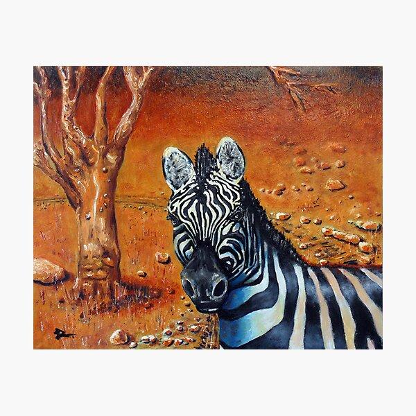 Berny The Zebra Photographic Print