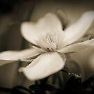 Softly softly by tarsia