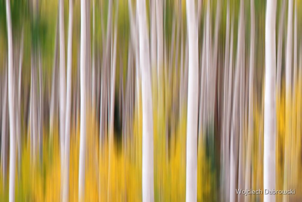 Abstract Aspens by Wojciech Dabrowski