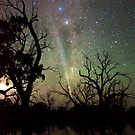 Comet Lovejoy Silhouettes by Wayne England
