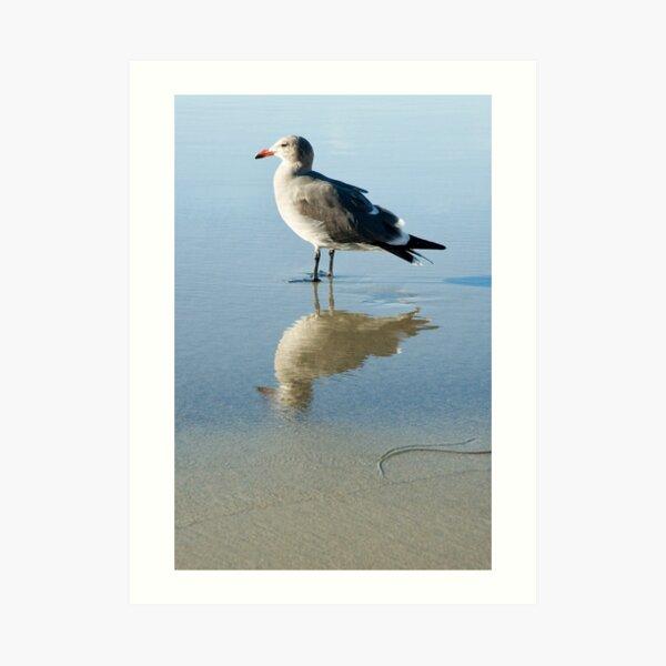 Seagull at La Jolla Shores beach, La Jolla, California Art Print