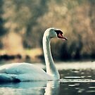Old Film swan by davesphotographics