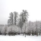 snowy trees by Mustafa UZEL