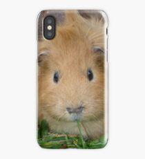 Ginger Guinea Pig iPhone Case/Skin
