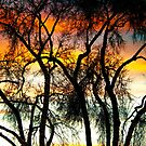 Colorful Silhouetted Trees 10 by Bo Insogna