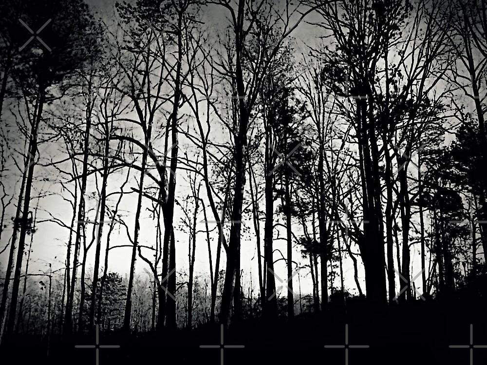 Fog Mist Darkness Forest Rain Trees by Scott Mitchell