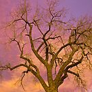 Colorful Cottonwood Pastel Sunset by Bo Insogna