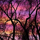Colorful Silhouetted Trees 21 by Bo Insogna