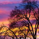 Colorful Silhouetted Trees 25 by Bo Insogna