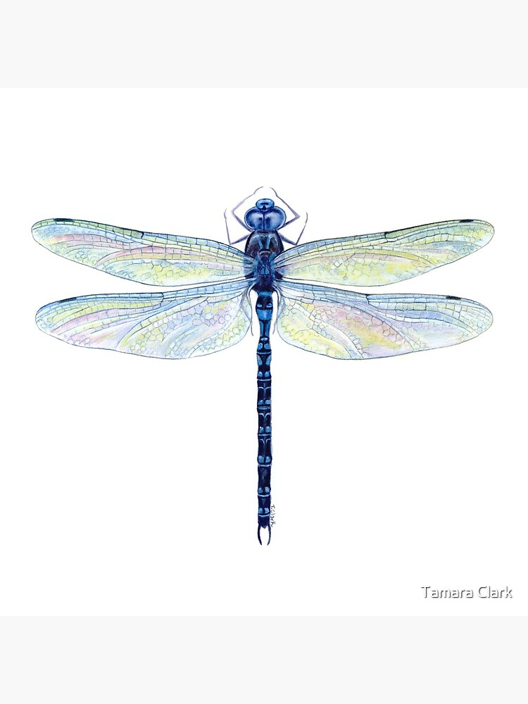 Spatterdock Dragonfly by edenart