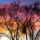 Colorful Silhouetted Trees 26 by Bo Insogna