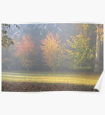 Trees in Autumn Colour, Poster