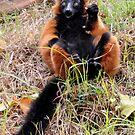 Lemur 2 by Lolabud