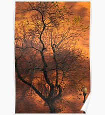Gold Rush Tree Poster