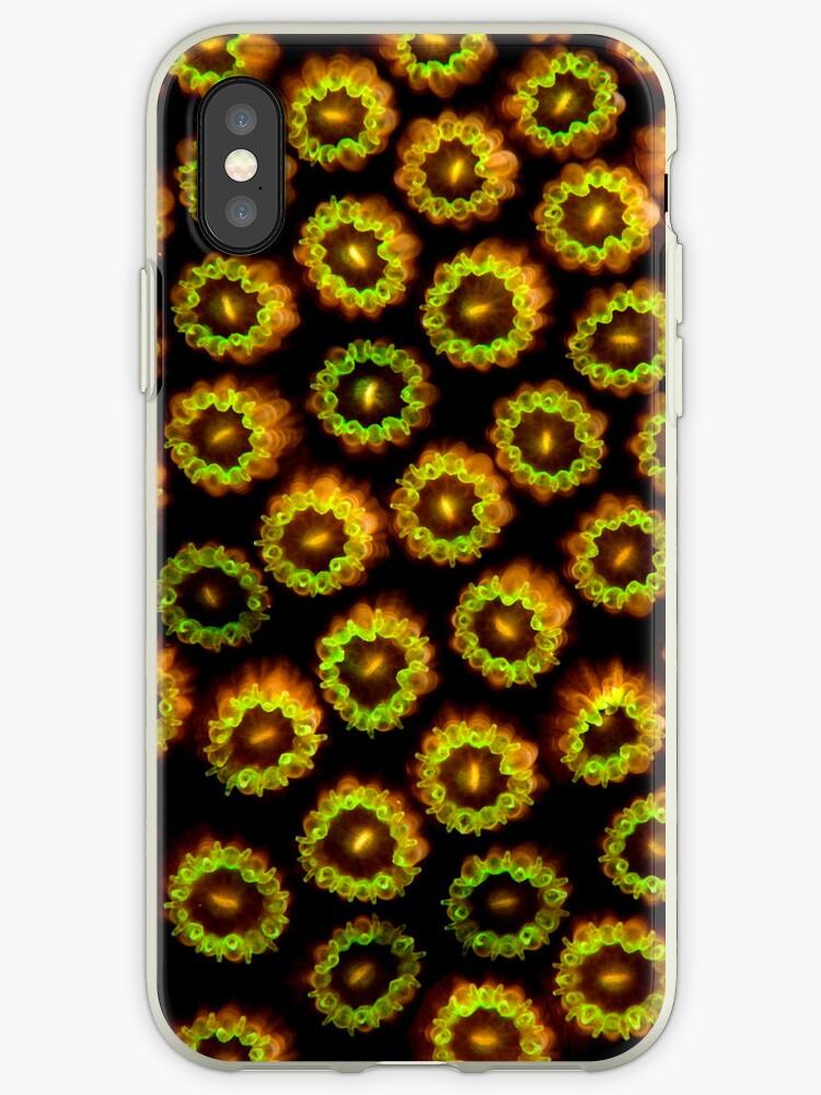 Underwater iPhone series - polyps by Carlos Villoch