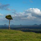 Alone on a Hill by Barbara Burkhardt