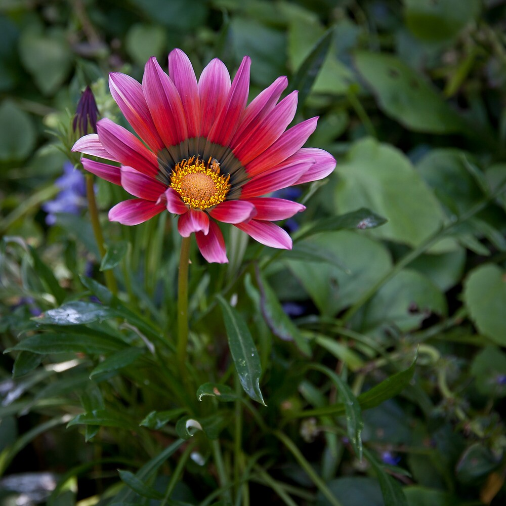 A Flower in the Garden by Samuel Gundry