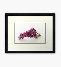 Purple Pink Wild Flower Framed Print