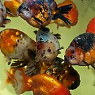 Bit Fishy by paulmcardle
