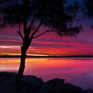 Budgewoi Lake - Reflections by Mathew Courtney