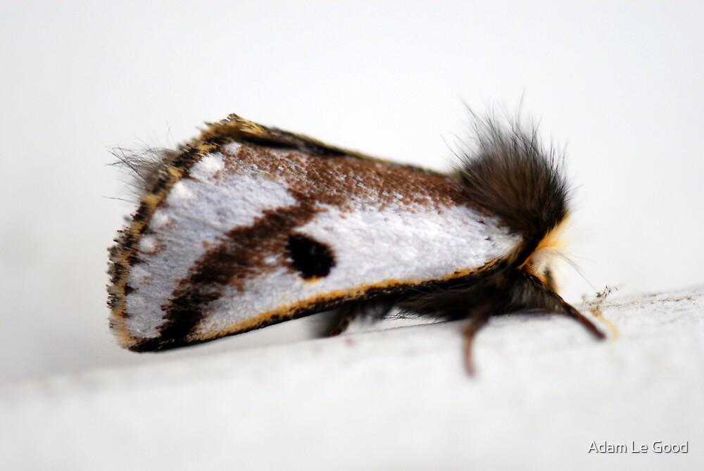 A moth in hiding by Adam Le Good