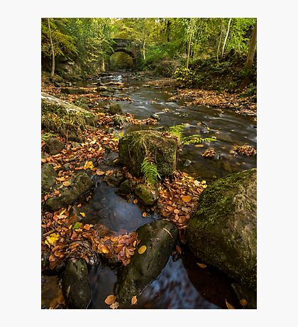 Maybeck Autumn Colours Photographic Print