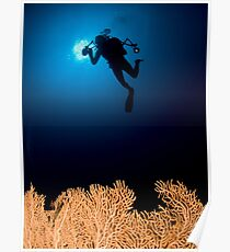 Underwater photograph of a diver swimming above an Anella Alcyonacea (soft corals) coral Poster