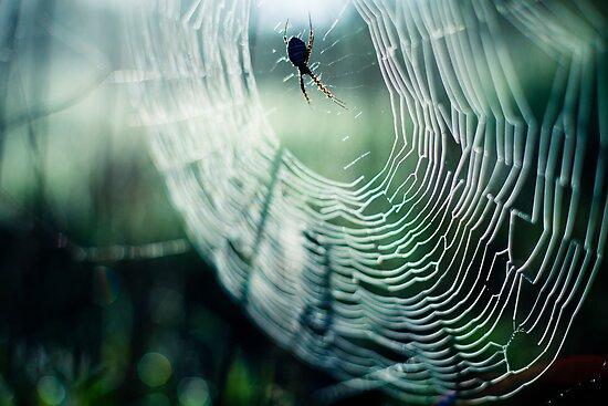 web by Victor Bezrukov