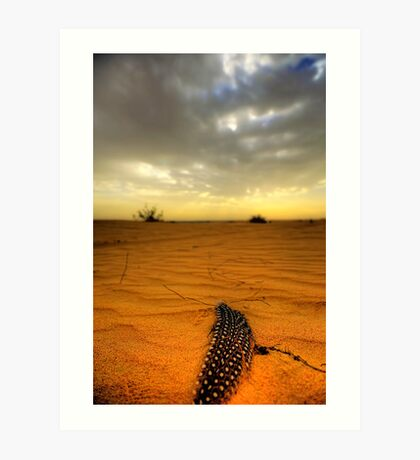 Desert Feather Art Print
