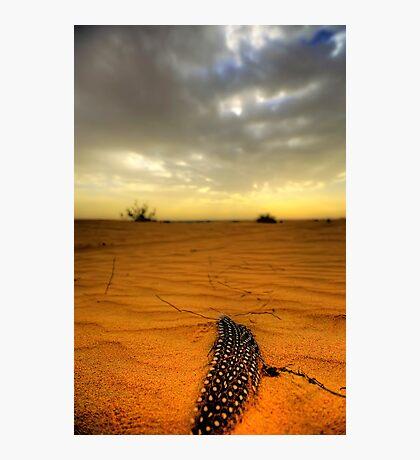 Desert Feather Photographic Print