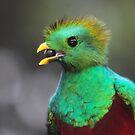 Resplendent Quetzal Portrait by naturalnomad