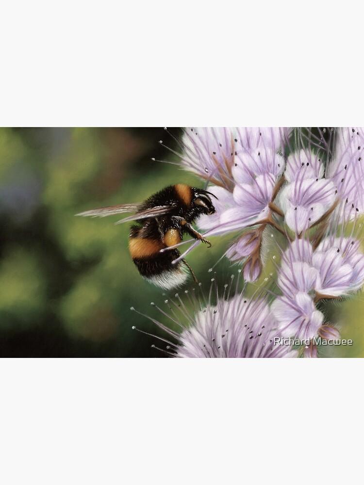 Bumblebee by richardmacwee